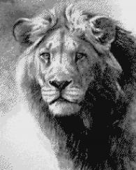 Мозайка картина - Лъв